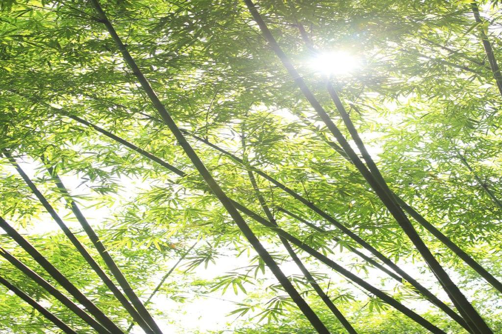 Bamboo tile